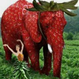 ecfunfruit funfruit