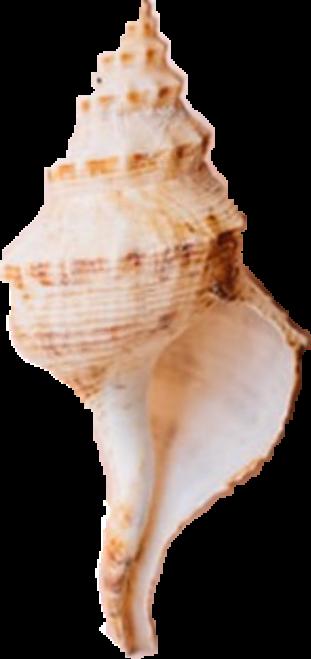 #freetoedit#shell