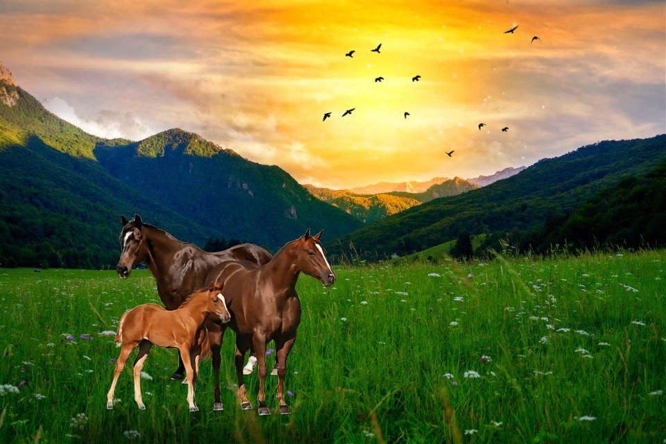 #freetoedit #landscape #scenery #mountains #wildlife #sunset #naturesbeauty #stickerart #picsarteffects #keepitsimple #myedit #madewithpicsart
