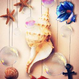freetoedit sealife interesting sea seashell fish bubbles strings starfish ircseatreasure seatreasure