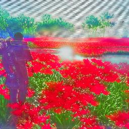 freetoedit madewithpicsart ghostoftsushima japan videogames samurai swords katana field roses flowers nature peace quiet ronin colourful