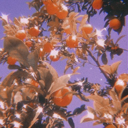 aestheitc lemon peachy cute pretty wallpaper photography summer freetoedit