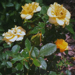 freetoedit picsart papicks photography naturephotography aesthetic aestheticphotography yellowaesthetic roses yellowroses roseaesthetic noise vynl myphotography myphoto nature