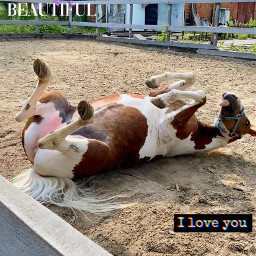 horse horses equestrian equestrians equestrianlove equine equinephotolove equinelove equinepassion equines horselovers_withpassion nature summer summer2020 monday cheval chevaux equitation лошадь лошади freetoedit