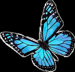 freetoedit butterfly mariposa mariposas butterflys love sky blue aesthetic aesteticblue