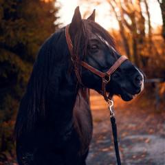 horse_freetodite
