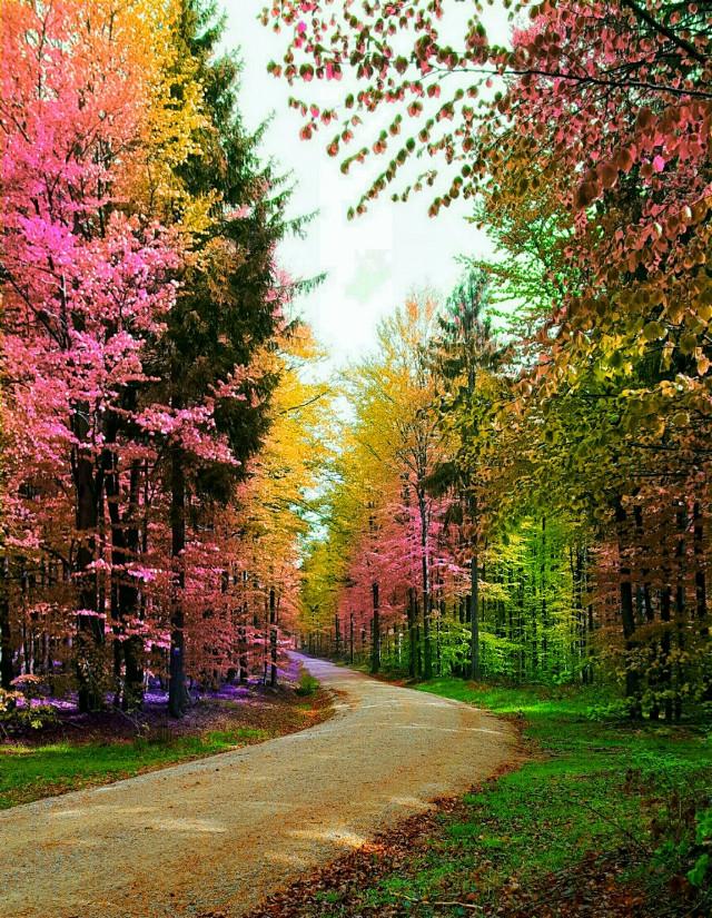 #freetoedit  #freetoedit #picsart #picsartphoto #vipshoutout #wppnature #forest #nature #naturesbeauty #naturephotography #colorful #changecolor #colorsplasheffect #dailyinspiration #dailytag #challenge #gallery #remix #remixit #remixed