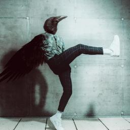 freetoedit raven cuervo blackbird ave transformation ecmyanimalalterego myanimalalterego