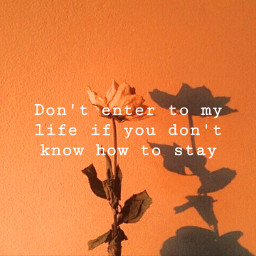 quotes quote aesthetic pickuplines pickupline sassy sassyqueen orange flower orangeaesthetic orangeflower