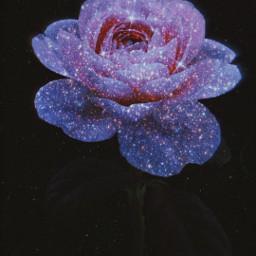 freetoedit picsart papicks glitter rose srcglitteroverlay