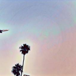 lax airplane airport palmtrees bluesky picoftheday