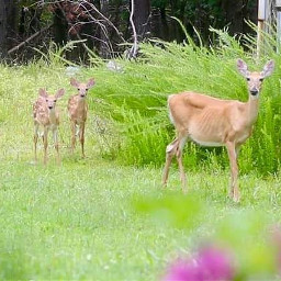 myphoto myedit outsidemywindow deer wildlife momandbabies naturephotograpy nature me freetoedit nature