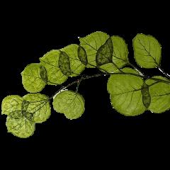freetoedit nature paper papel collage tumblr colagem natureza verde planta