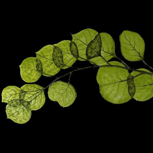 #freetoedit #nature  #paper #papel #collage #tumblr #colagem #natureza #verde #planta
