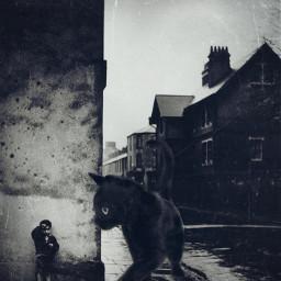 freetoedit blackandwhite vintagephoto streetphotography cat