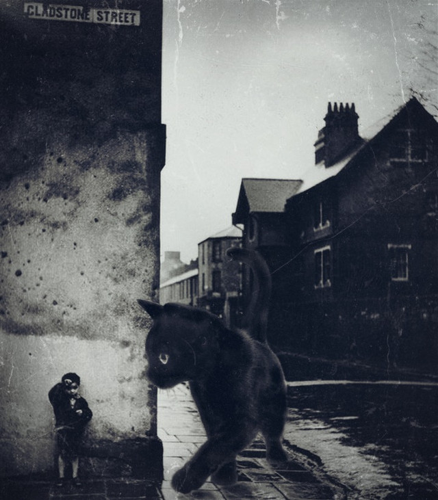 #freetoedit #blackandwhite #vintagephoto #streetphotography #cat