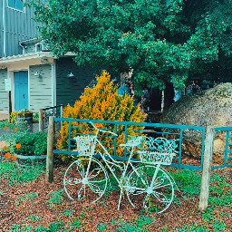daisysquad bike white yellow green brown blue nature winery park picsart followme freetoedit