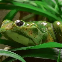 magiceffects undeadmagiceffect artisticeffects artisticeffect frog petsandanimals naturephotography animaleye nikonphotography macrophotography