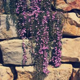cascadeofflowers nature rockwall rocks garden freetoedit
