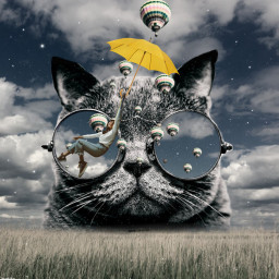 cat sky psicodelic fanartofkai crazycat crazy freetoedit srcyellowumbrella yellowumbrella
