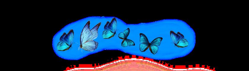 blue blush butterfly bluebutterfly freetoedit