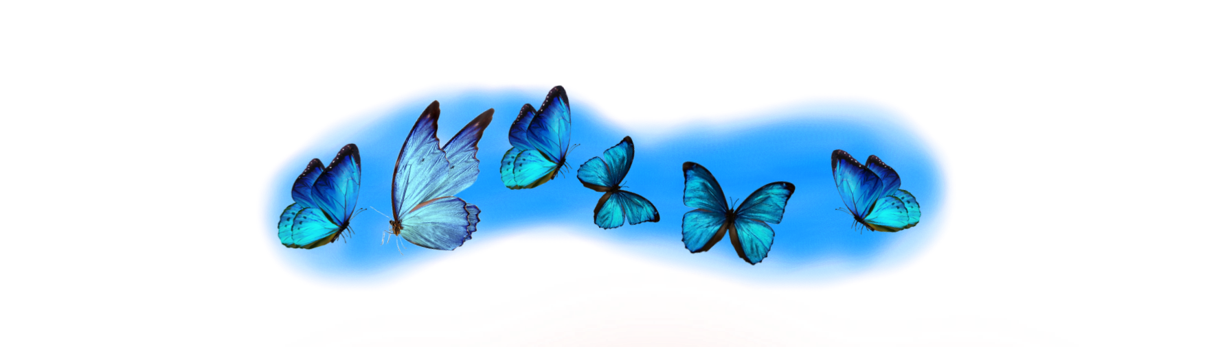 #blue #blush #butterfly #bluebutterfly
