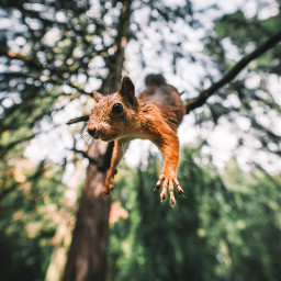 squirrel animal animals freetoedit