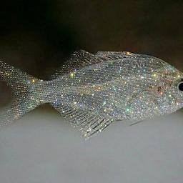 fish crystalart glitter sparkle shine freetoedit