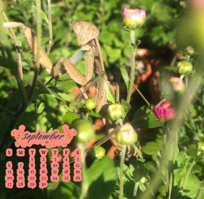 September is finally here. #september #septembershere #bugs #nature #mums #flowers