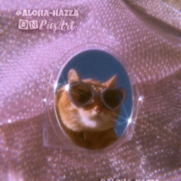 pink pinkaesthetic 90svibes 2000s sparkle sparkles mirrorselfies cat catlove cool sunglasses photography interesting fun mirrorselfie