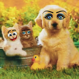 cutepets cuteanimals unlimitedcuteness puppy kittensinabasket goldenretrieverpuppy rubberducky backyard cutebackground eccartoonifiedanimals cartoonifiedanimals