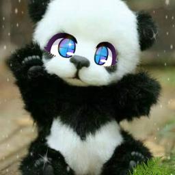 freetoedit panda ojos eyes panda🐼 tierno edit eccartoonifiedanimals cartoonifiedanimals