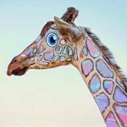animal cuteanimal giraffe myedit mymix mix edit picsart challenge picsartchallenge cartooneye cartoon colorfull freetoedit eccartoonifiedanimals cartoonifiedanimals