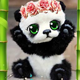 natalygiselle freetoedit hermoso😍 fotoedit bamboo flores bonito giselle ojos hermoso❤ pandalove🐼 fotografía📷❤ fotoedit😜 hermoso pandalove fotografía eccartoonifiedanimals cartoonifiedanimals