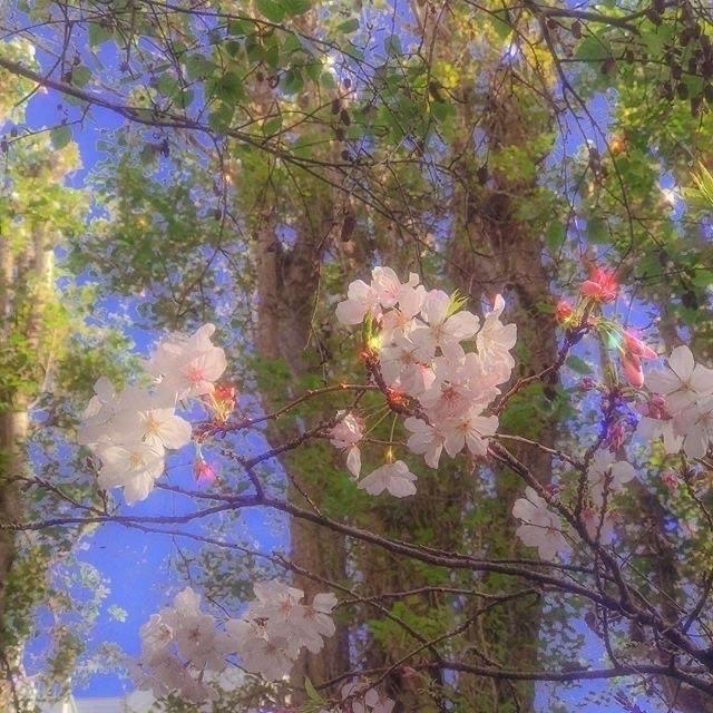 #nature #flowers #aesthetic #image #tumblr #magic #freetoedit #rainbow #4seasons #freetoedit #remix
