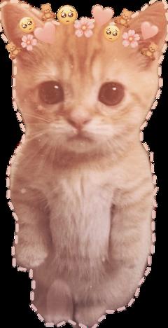 aesthetic kitten cute emojis emoji uwu soft pop kpop bts blackpink gacha gachaclub edit editedbyme sweet freetoedit