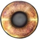 freetoedit eyes eye eyecolor beautyeye bipeye besteyes fireeye browneye
