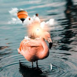 shutterstock surrealism flamingo fxtools squarefit blendingtools adjusttools beautifytool stickers playingwithpicsart myimaginationatwork freetoedit unsplash