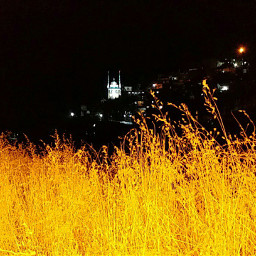 freetoedit autumn nightsky night nature yellow mosque vegetation herbage