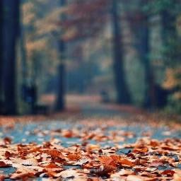 freetoedit fall autumn fallwallpaper autumnwallpaper