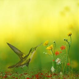 kolibri bird flowers meadow freetoedit