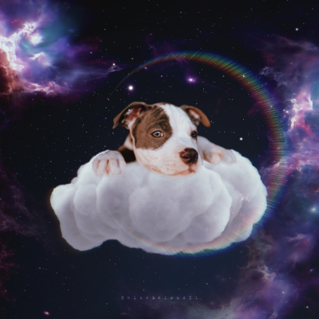 🐕🌙🌌#dog #madewithpicsart #madebyme #myedit #space #galaxy #magical #cute #cloud #puppy #universe #lights @picsart Op from Unsplash