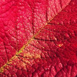freetoedit blatt herbst challenge pcleavesisee leavesisee