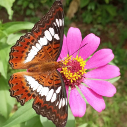 butterfly photography nature flower kerala india