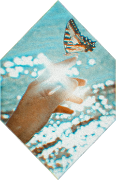 aesthetic butterfly butterflyaesthetic teal coral glitch coralteal freetoedit