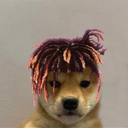 doge freetoedit