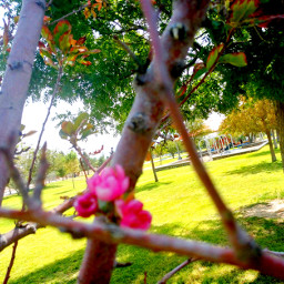 september212020 tree treebloom blossom septembersurprise nature lifeisbeautiful mylife myphotography