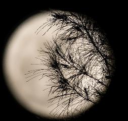 moon night freetoedit