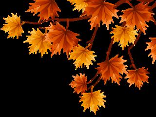 freetoedit autumn helloautumn cool september october oranges yellow madinn