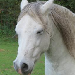 photography equine horse petsandanimals travel rtfartee myphoto noeditneeded